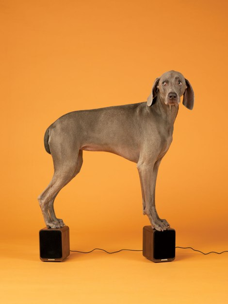 William Wegman shoots Bloomberg Pursuits Holiday GiftGuide